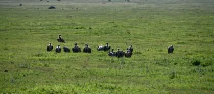 Tanzania-Ngorogoro_Conservation_Area-042-DSC_6055