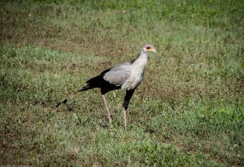 Tanzania-Ngorogoro_Conservation_Area-043-DSC_6064