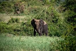Tanzania-Ngorogoro_Conservation_Area-044-DSC_6071