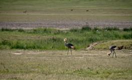 Tanzania-Ngorogoro_Conservation_Area-045-DSC_6076