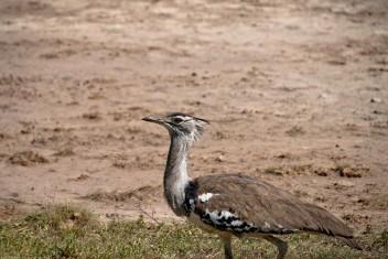 Tanzania-Ngorogoro_Conservation_Area-046-DSC_6077