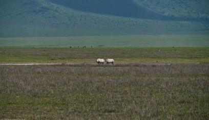 Tanzania-Ngorogoro_Conservation_Area-047-DSC_6080