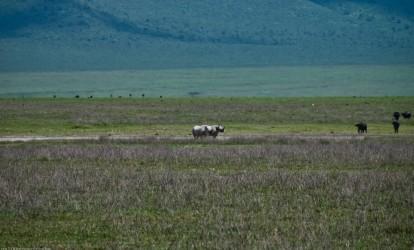 Tanzania-Ngorogoro_Conservation_Area-048-DSC_6089