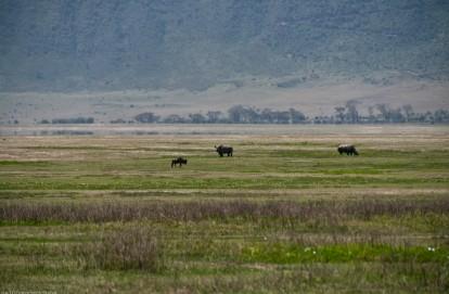 Tanzania-Ngorogoro_Conservation_Area-049-DSC_6094