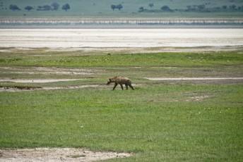 Tanzania-Ngorogoro_Conservation_Area-051-DSC_6097