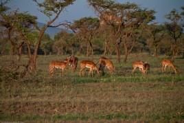 Tanzania-Serengeti_National_Park-004-DSC_5803