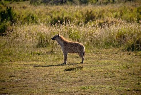 Tanzania-Serengeti_National_Park-005-DSC_5857