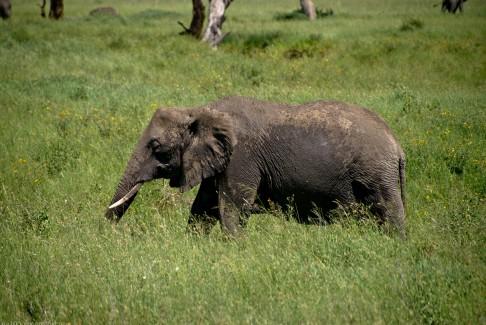 Tanzania-Serengeti_National_Park-006-DSC_5494