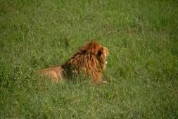 Tanzania-Serengeti_National_Park-013-DSC_5447