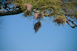 Tanzania-Serengeti_National_Park-014-DSC_5456