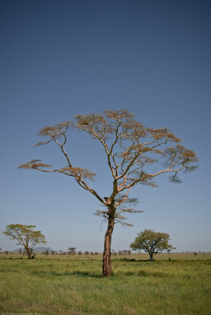 Tanzania-Serengeti_National_Park-019-DSC_5458