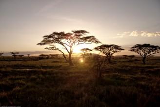 Tanzania-Serengeti_National_Park-020-DSC_5683