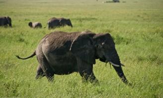 Tanzania-Serengeti_National_Park-021-DSC_5365