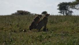 Tanzania-Serengeti_National_Park-025-DSC_5200-2