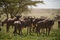 Tanzania-Serengeti_National_Park-026-DSC_5190