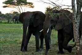 Tanzania-Serengeti_National_Park-029-DSC_5272