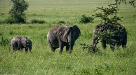 Tanzania-Serengeti_National_Park-030-DSC_5370