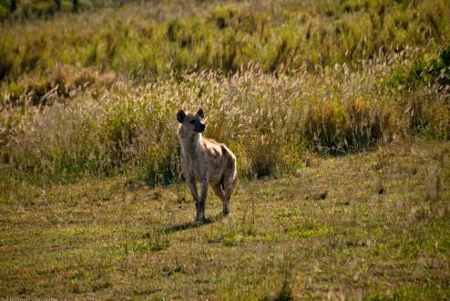 Tanzania-Serengeti_National_Park-031-DSC_5856