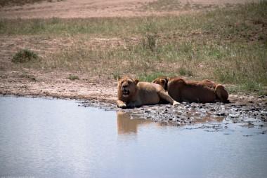 Tanzania-Serengeti_National_Park-032-DSC_5929