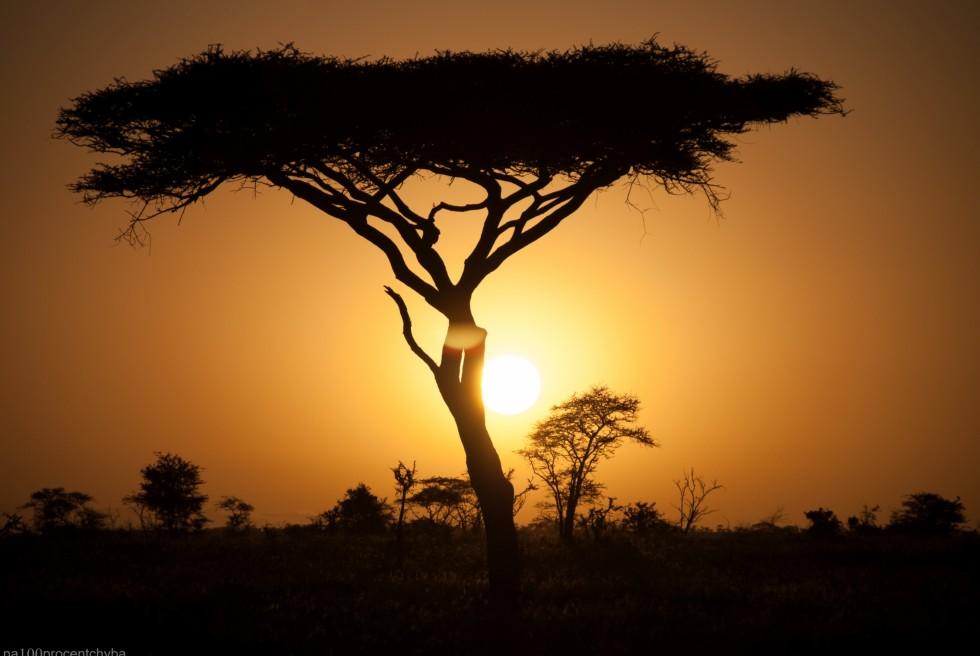 Tanzania-Serengeti_National_Park-033-DSC_5781