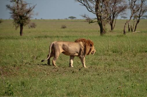 Tanzania-Serengeti_National_Park-034-DSC_5357