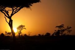 Tanzania-Serengeti_National_Park-039-DSC_5778