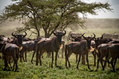 Tanzania-Serengeti_National_Park-041-DSC_5191