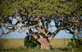 Tanzania-Serengeti_National_Park-043-DSC_5658