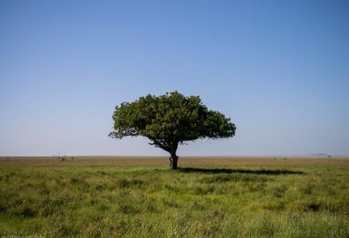 Tanzania-Serengeti_National_Park-047-DSC_5338