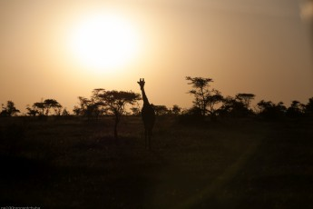 Tanzania-Serengeti_National_Park-050-DSC_5794