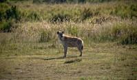 Tanzania-Serengeti_National_Park-054-DSC_5858