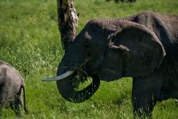 Tanzania-Serengeti_National_Park-057-DSC_5394