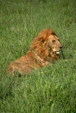 Tanzania-Serengeti_National_Park-060-DSC_5413