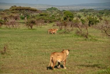 Tanzania-Serengeti_National_Park-061-DSC_5317