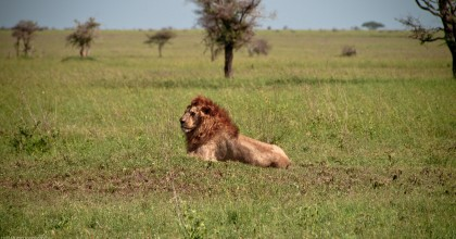 Tanzania-Serengeti_National_Park-065-DSC_5352