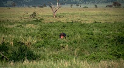 Tanzania-Serengeti_National_Park-068-DSC_5833