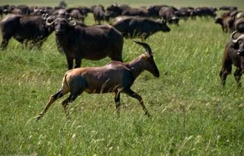 Tanzania-Serengeti_National_Park-069-DSC_5548