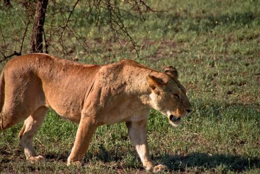 Tanzania-Serengeti_National_Park-070-DSC_5313