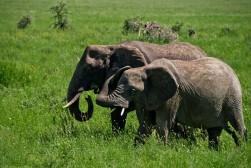 Tanzania-Serengeti_National_Park-071-DSC_5462