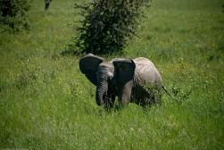 Tanzania-Serengeti_National_Park-072-DSC_5465