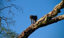 Tanzania-Serengeti_National_Park-073-DSC_5814