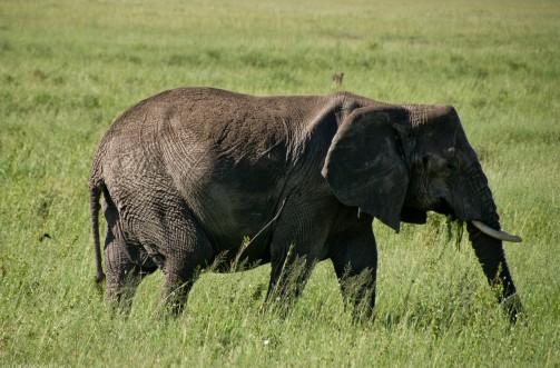 Tanzania-Serengeti_National_Park-075-DSC_5369