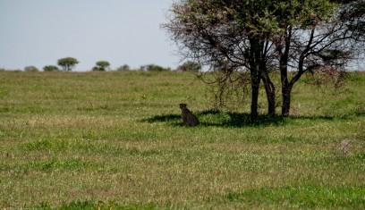 Tanzania-Serengeti_National_Park-076-DSC_5910