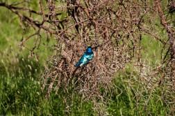 Tanzania-Serengeti_National_Park-078-DSC_5330