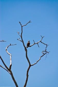Tanzania-Serengeti_National_Park-082-DSC_5614