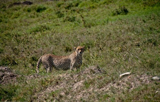 Tanzania-Serengeti_National_Park-083-DSC_5949