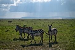 Tanzania-Serengeti_National_Park-084-DSC_5241