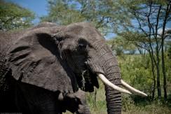 Tanzania-Serengeti_National_Park-085-DSC_5620