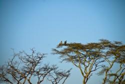 Tanzania-Serengeti_National_Park-087-DSC_5675