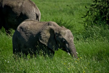 Tanzania-Serengeti_National_Park-089-DSC_5378